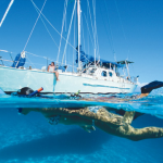 Golden Star: Boat renting bahamas | Evaluation